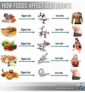 SHM Health Tips_How Food Affects Our Body